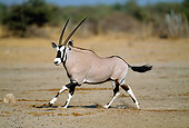 AFW 29 MH0004 01