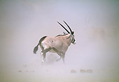 AFW 29 MH0006 01