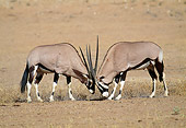 AFW 29 MH0007 01
