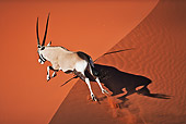 AFW 29 MH0019 01