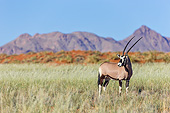AFW 29 MH0025 01