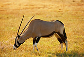 AFW 29 RK0001 02