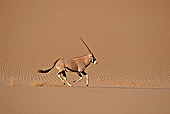 AFW 29 SM0028 01