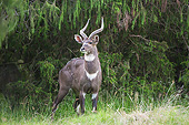 AFW 31 AC0009 01