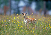 AFW 31 GL0003 01