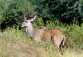 AFW 31 GL0004 01