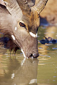 AFW 31 HP0003 01