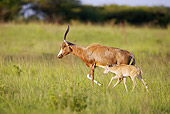 AFW 31 HP0008 01