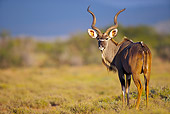 AFW 31 HP0010 01