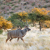 AFW 31 KH0002 01