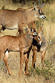 AFW 31 KH0005 01