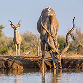 AFW 31 KH0007 01