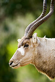 AFW 31 MH0001 01