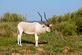 AFW 31 MH0002 01