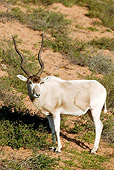 AFW 31 MH0003 01