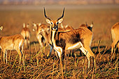 AFW 31 MH0007 01