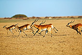AFW 31 MH0009 01
