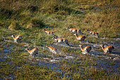 AFW 31 MH0015 01