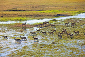 AFW 31 MH0016 01