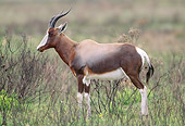 AFW 31 MH0026 01