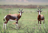 AFW 31 MH0027 01