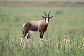 AFW 31 MH0028 01