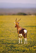 AFW 31 MH0032 01