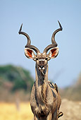 AFW 31 MH0036 01
