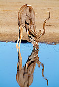 AFW 31 MH0038 01