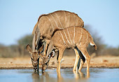 AFW 31 MH0041 01