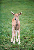 AFW 31 RK0030 01