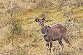 AFW 31 WF0002 01