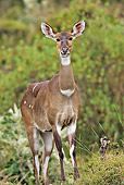 AFW 31 WF0004 01