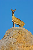 AFW 31 WF0006 01