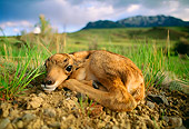 AFW 31 DB0001 01