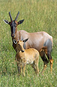 AFW 31 NE0003 01