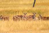 AFW 31 RK0006 01
