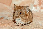AFW 35 AC0002 01