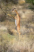 AFW 35 GL0002 01