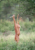 AFW 35 GL0003 01