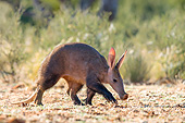AFW 35 KH0001 01