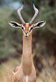 AFW 35 MH0002 01
