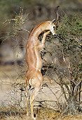 AFW 35 MH0003 01