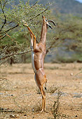 AFW 35 MH0004 01