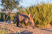 AFW 35 MH0007 01