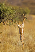AFW 35 WF0001 01