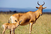 AFW 35 JZ0001 01