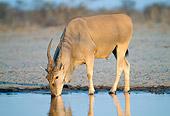 AFW 36 MH0001 01