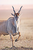 AFW 36 MH0005 01