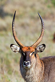 AFW 37 MH0001 01